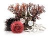 Oase biOrb Decor Set 15L - Red Forest