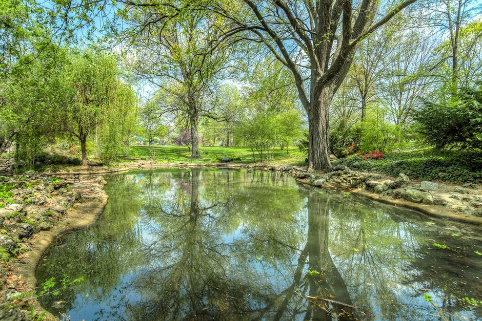 Pond Maintenance: How to Maintain Your Pond During the Summer