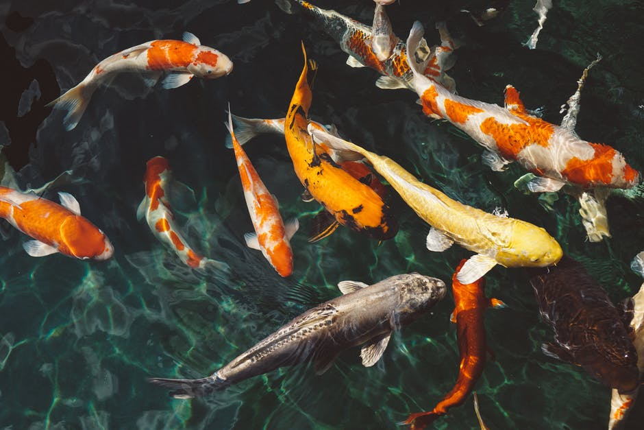 The Complete Checklist for Building a Koi Pond